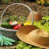 کاربرد هورمون در باغبانی